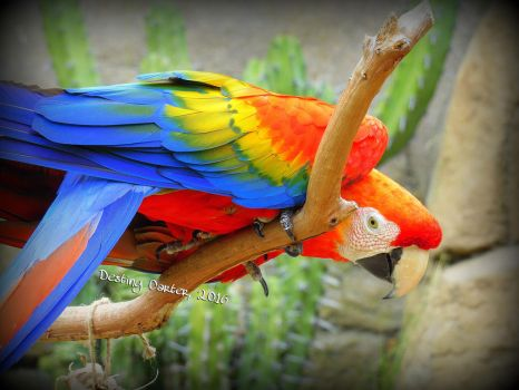 Red Macaw by Destiny-Carter