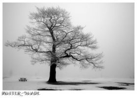 Tree of life by whiter-shade