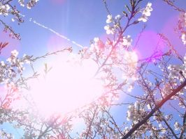 Sun In Cherry Trees by SoullessRiku