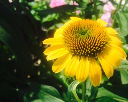 Photography: Flower 16 by vt2000