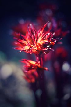 Flowers 2 by xelectriclady
