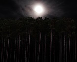 Foggy Moon Over Tall Pines by herbalcell