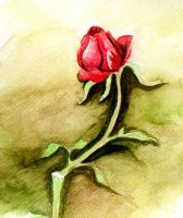 Red Rose by LoVeras