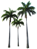 Palm trees by Owhl-stock