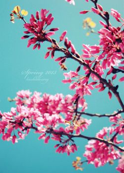 Pink in the sky - Spring 2013 by koshadesing