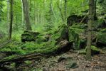 Stones in forest by veruce