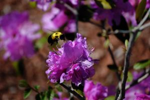 Bumble Bee by ApplePo3