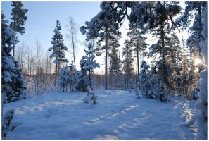 Winter Afternoon 9 by Eirian-stock