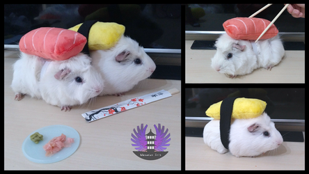 April fools - SushiCui - Guinea Pig Sushi Cosplay by BoiraPlushies