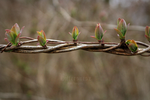 Sprouting by Bittersuesz