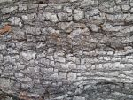 Bark Textures 04 by DKD-Stock