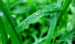 And So The Grass Wept by katpann