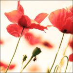 Red passion _ by topinka
