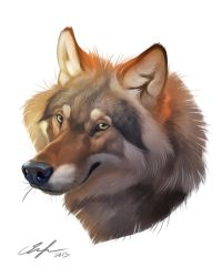 30 min wolf by ailah