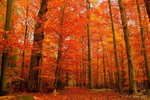 Red Forest by ulivonboedefeld