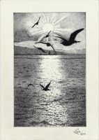 Seagulls Over The Ocean by StephanoAnt