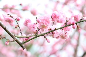 Early blossoms. by wfpronge
