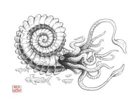 Giant Ammonite by aaronjohngregory
