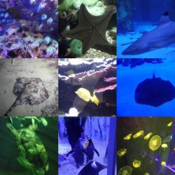London Sea Life Aquarium by Londonexpofan