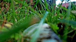 What is there in the grass? by Zorodora