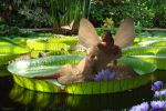 Fairy Afloat... by tndrhrtd37