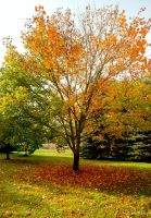 The Tree of Many Colours by elanordh