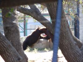 Folsom City Zoo Photo Series11 by lilly-peacecraft