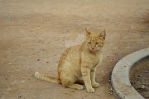 #Animales #Gato #Cat by TitoCullen