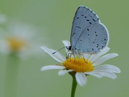 Dinner on a camomile by dralik