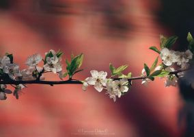 Blossom tree by FrancescaDelfino