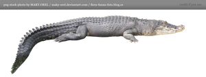PNG STOCK: Crocodile by MAKY-OREL