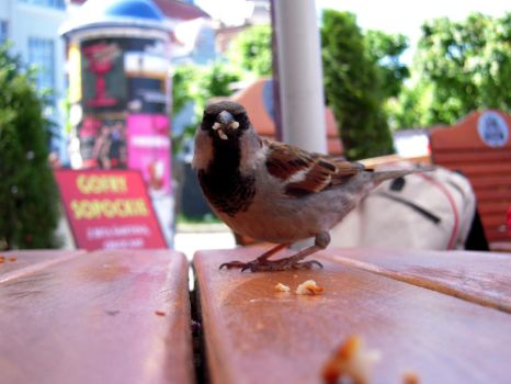 hungry sparrow. by windismystylist