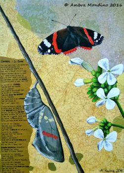 Changes - Red admiral by flysch