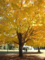 Yellow Tree 2 by Lady-KL