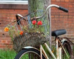 Bicycle Planter by lupiniastudios