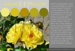 TIP - Shades of yellow by Shelter85