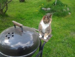 Did you need help with grilling? by Jyrsis95