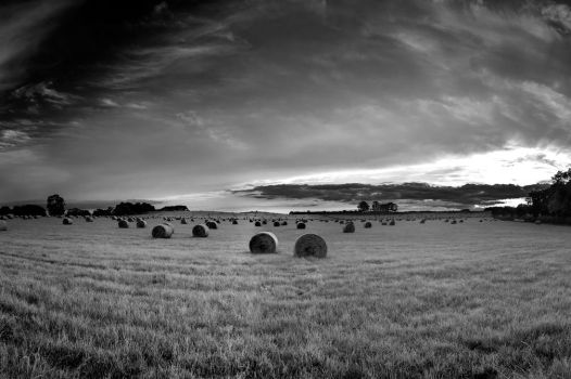 Rolled II by rephocus