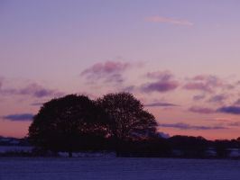 Winter Trees Frosty Eve by davepphotographer