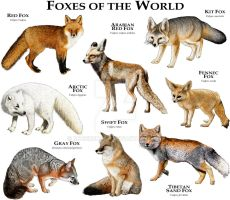 Foxes of the World by rogerdhall
