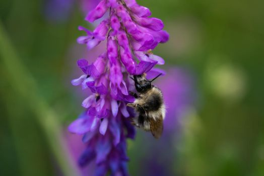 Bee on purple by Greencz