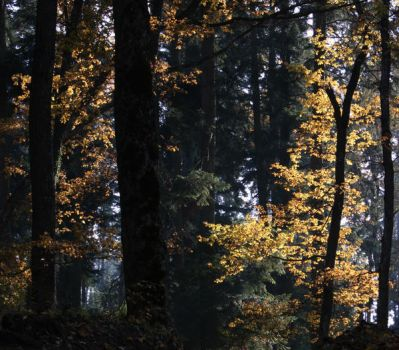 Autumn forest... by 7DS7