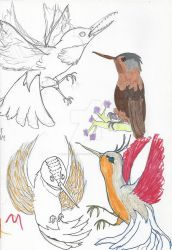 Feb Hummingbird Sketches by Paws-for-a-Moment