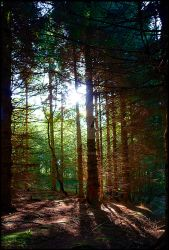 Magic Of The Woods by welshbeck