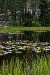 Lily pond by kayaksailor