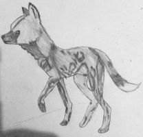 Wild dog by bpcampbell