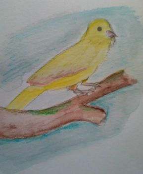 Canary by Domini-o