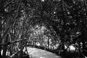 Shaded Path by tjohare