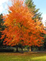 Stock: Fall Foliage Leaves II by Stock-By-Michelle