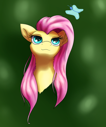 Flutter headshot by Coldtrail
